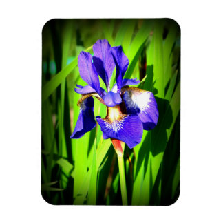 "Iris 3"" by 4"" Photo Magnet"