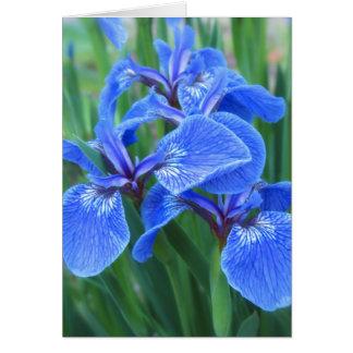 Iris Blue Card