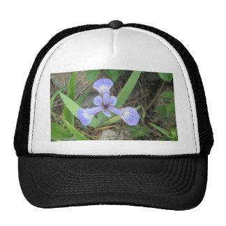 Iris Blue Flag Flower Cap