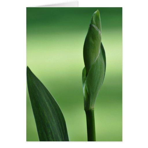 Iris Bud Cards