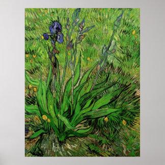 Iris by Vincent van Gogh, Vintage Impressionism Poster