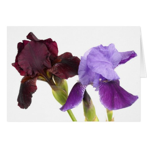 Iris Cards