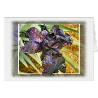 Iris Dark Purple with Rain Drops Card
