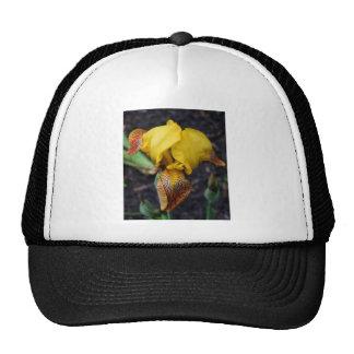 Iris Dwarf Yellow II Cap