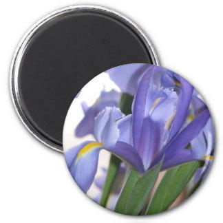 Iris Explosion Magnet