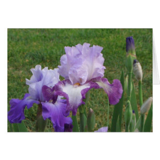 Iris Floral Design Note Card