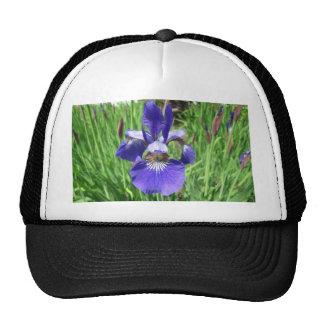 Iris Flower Blue Flag Cap