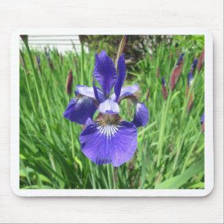 Iris Flower Blue Flag Mouse Pad