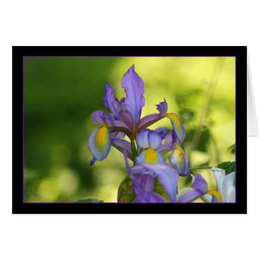 Iris flower cards