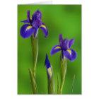 Iris Flowers Card