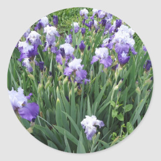 Iris flowers round sticker