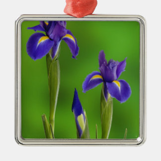 Iris Flowers Silver-Colored Square Decoration