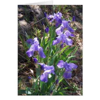 Iris Fower Garden Greeting Card