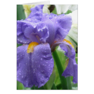Iris in a Spring Shower Note Card