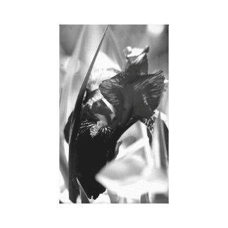 Iris in black and white gallery wrap canvas