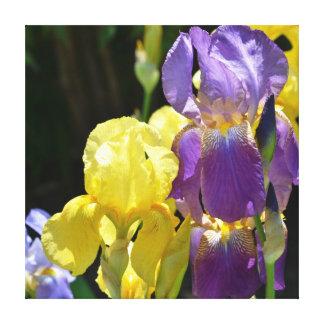 Iris in Spring Canvas Prints