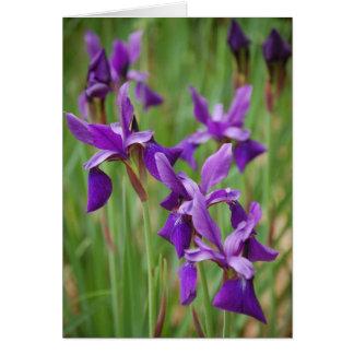 Iris Note Card