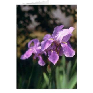 Iris Notecard