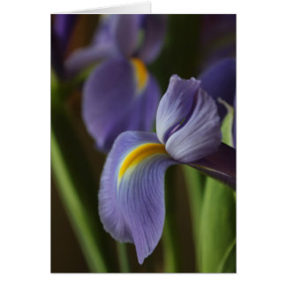 Iris Notecard Note Card