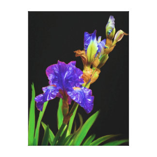 Iris on blacksmooth canvas print