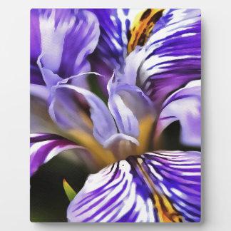 Iris Plaque