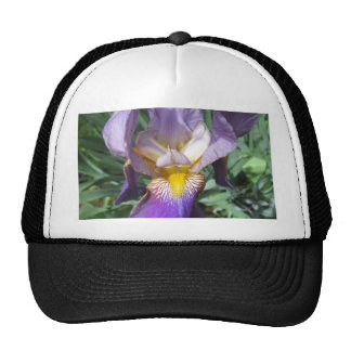 Iris Purple Bearded Cap