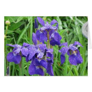 Iris Siberian Cards