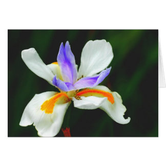 Iris Wild Fairy Greeting Card