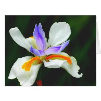 Iris Wild Fairy Large Greeting Card