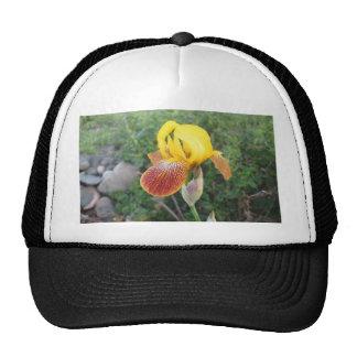Iris Yellow Bearded Cap