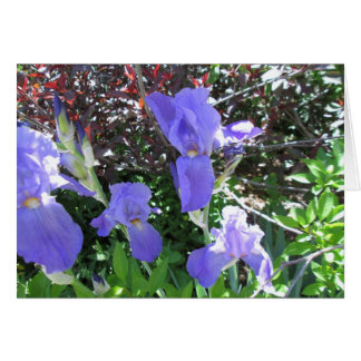 Irises All Occasion Card