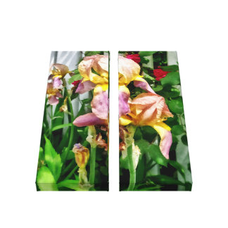 Irises By Picket Fence Canvas Print