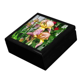 Irises By Picket Fence Gift Box