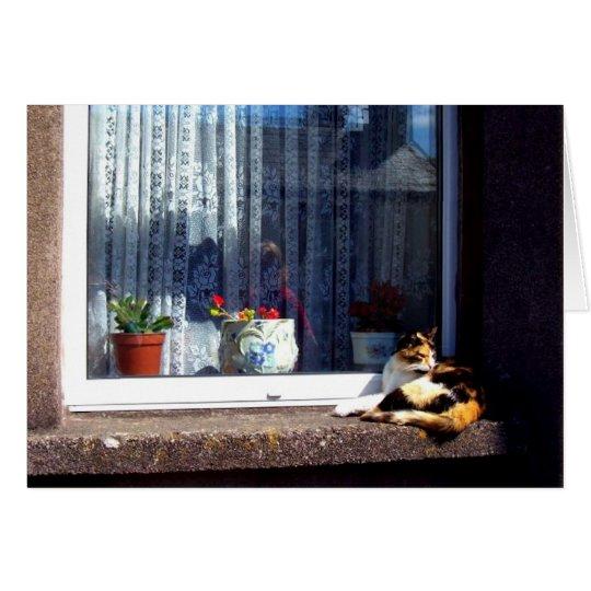 irish cat on a windowsill card