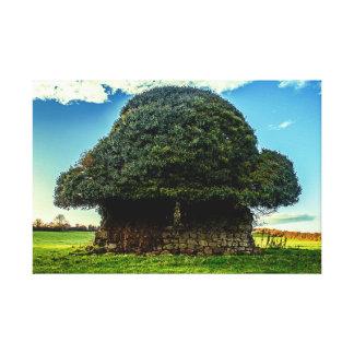 Irish Mushroom House Canvas Print