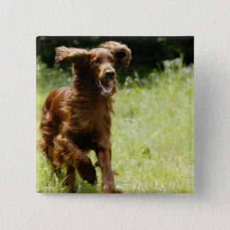 Irish Setter 15 Cm Square Badge
