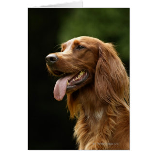Irish Setter 2 Card