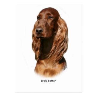 Irish Setter 9Y322D-116 Postcard