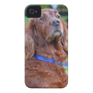 Irish Setter dog beautiful photo portrait, gift iPhone 4 Covers