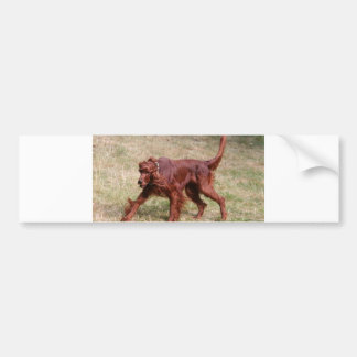 irish setter full 3 bumper sticker