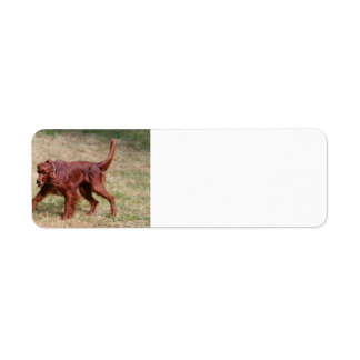 irish setter full 3 return address label