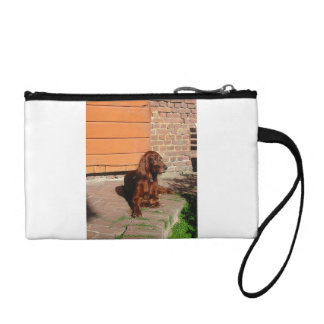 irish setter laying coin purse