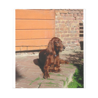 irish setter laying notepad