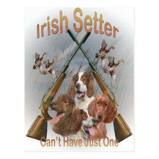 Irish Setters Can't Have Just One Postcard