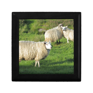 Irish Sheep Gift Box