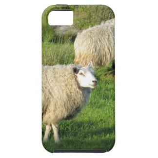 Irish Sheep iPhone 5 Cases