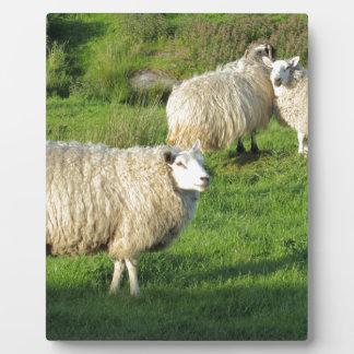 Irish Sheep Plaque