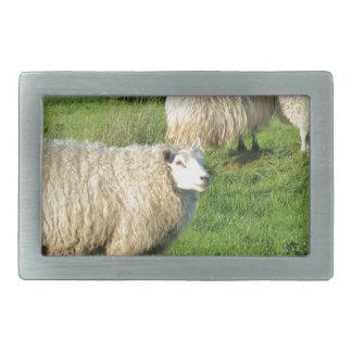 Irish Sheep Rectangular Belt Buckles