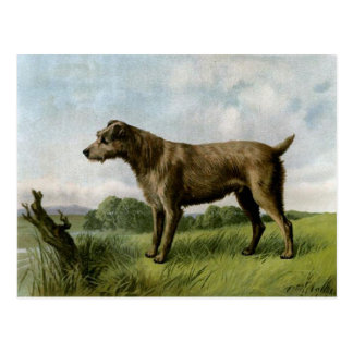 Irish Terrier Postcard