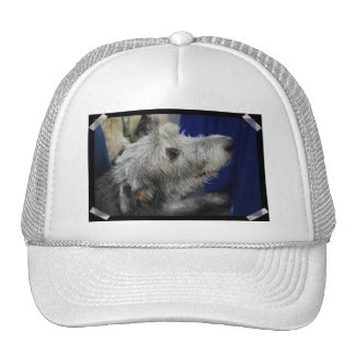 Irish Wolfhound Baseball Hat